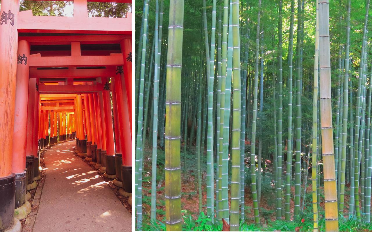 fushimi inari e arashiyama - giappone