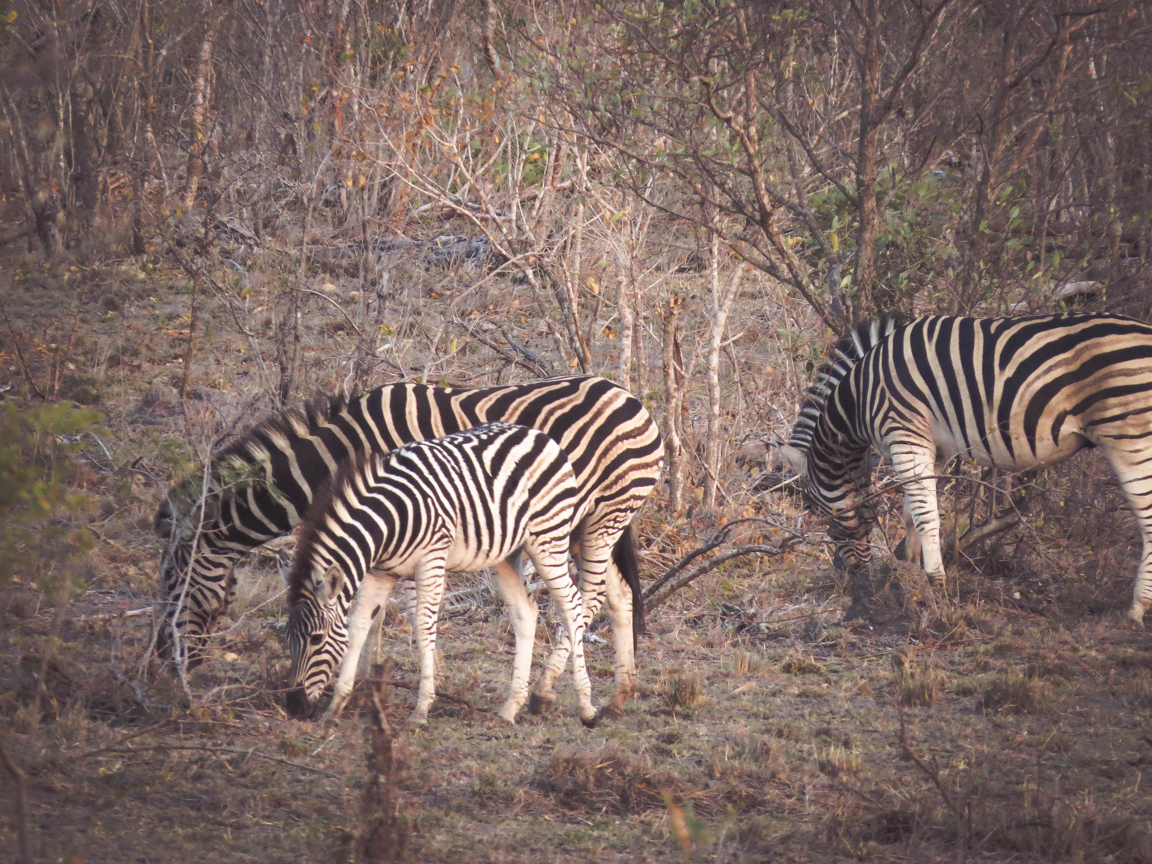 sudafrica - kruger