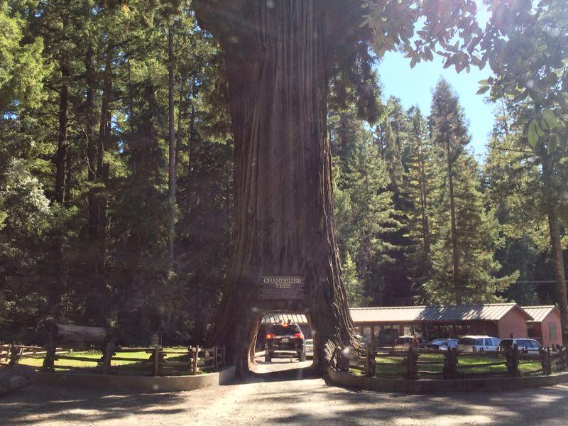leggett - chandelier drive-thru tree