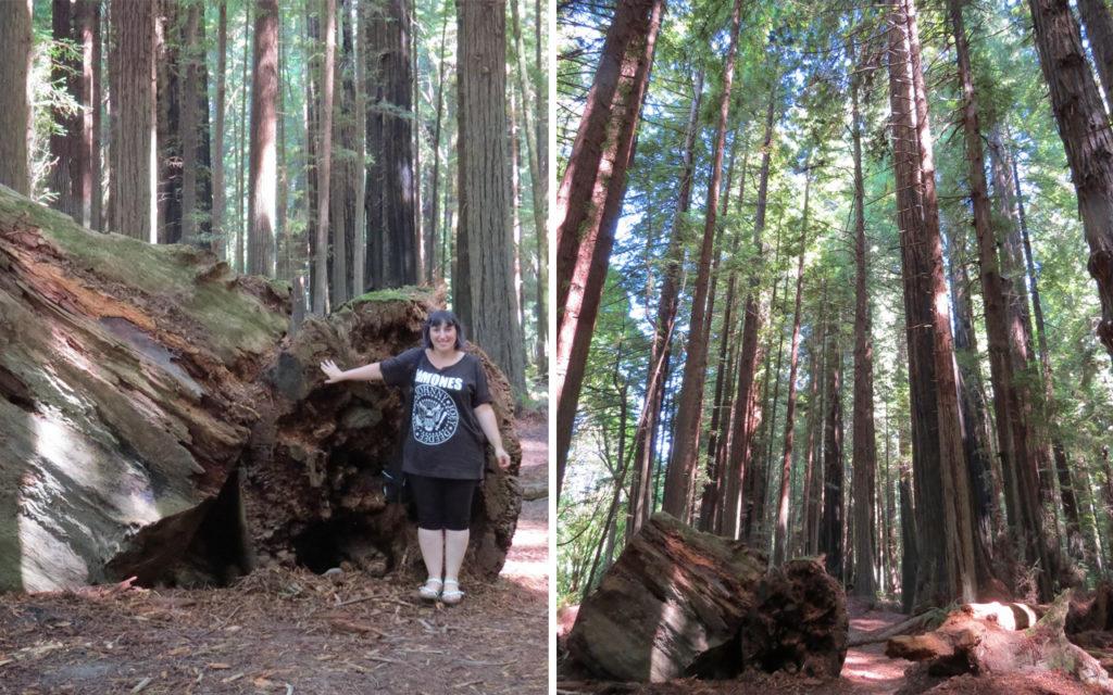 california - avenue of the giants